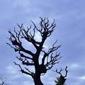 孤独な柿の木