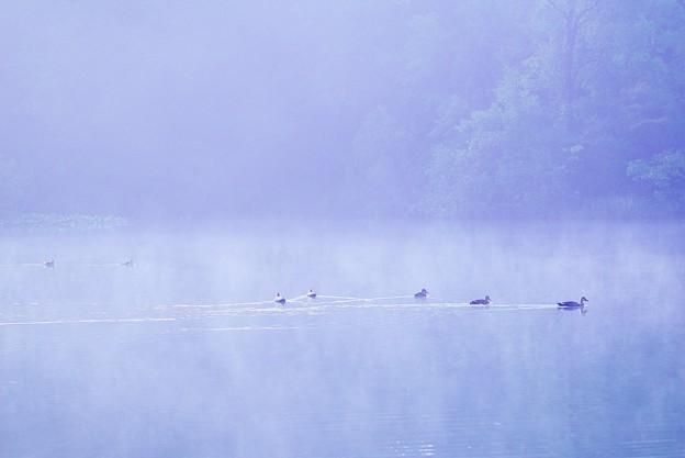 霧の三宝寺池