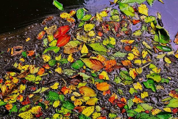 落ち葉の漂い