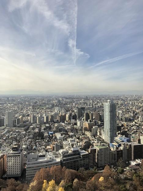 東京都庁からの景色☆職員食堂からみた新宿