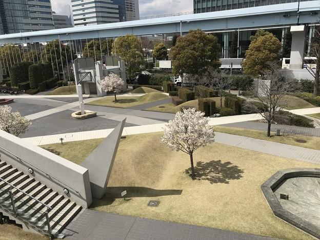 東京国際展示場の桜