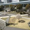 Photos: 東京国際展示場の桜