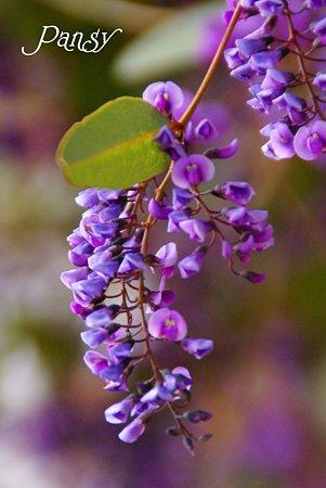 揺れる紫・・
