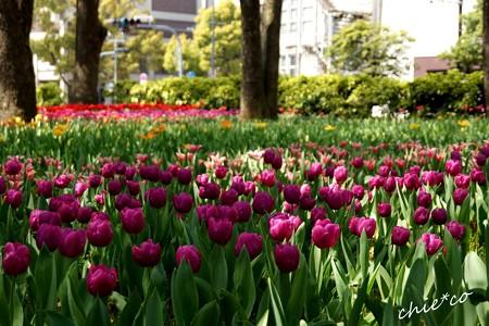 横浜公園-103