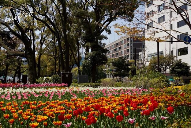 横浜公園-111