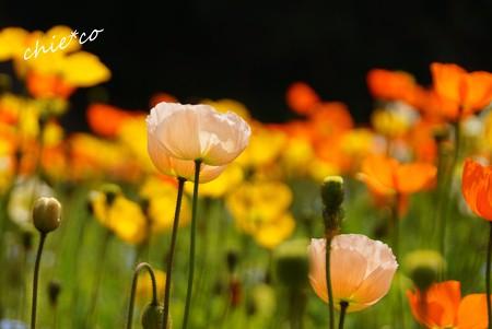 くりはま花の国-025