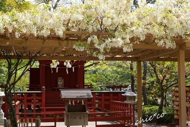 鎌倉-101