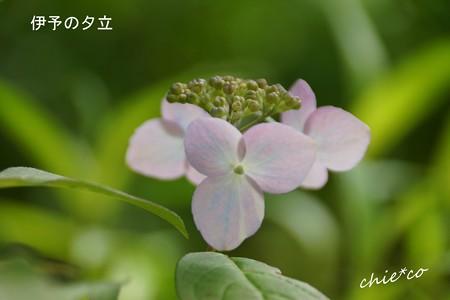鎌倉長谷-041