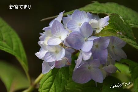 鎌倉長谷-057