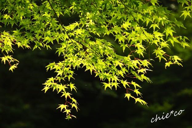 北鎌倉-080