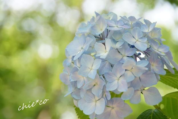 八景島-099