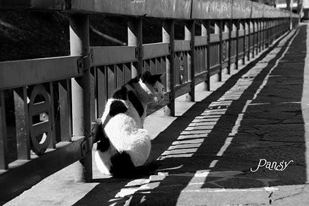 足利の猫さん・・2