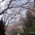 写真: 鎌倉-313