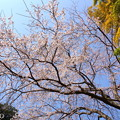 写真: 鎌倉-320