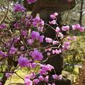 写真: 鎌倉-331