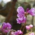 写真: 鎌倉-332