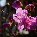 写真: 鎌倉-333