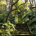写真: 鎌倉-345