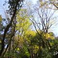 写真: 鎌倉-353