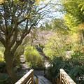 写真: 北鎌倉-381