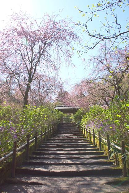 写真: 北鎌倉-383