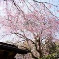 写真: 北鎌倉-385