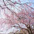 写真: 北鎌倉-387