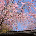 写真: 北鎌倉-389