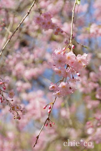 写真: 北鎌倉-391