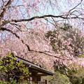写真: 北鎌倉-396
