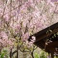 写真: 北鎌倉-394