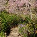 写真: 北鎌倉-400