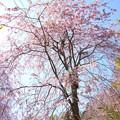 写真: 北鎌倉-402