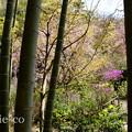 写真: 北鎌倉-404
