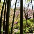写真: 北鎌倉-405