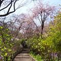 写真: 北鎌倉-407
