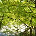 写真: 北鎌倉-426