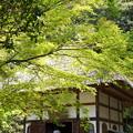 写真: 北鎌倉-429