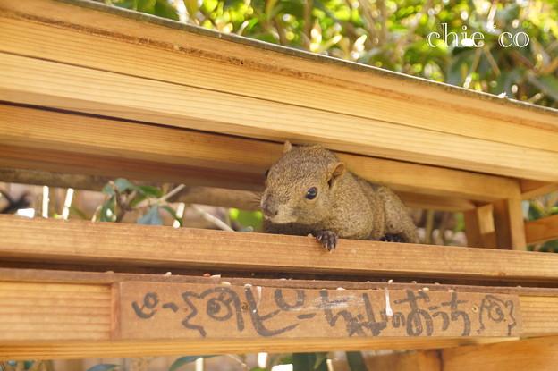 写真: 北鎌倉-440