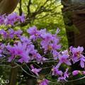 写真: 北鎌倉-443
