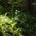 写真: 北鎌倉-445