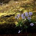 写真: 北鎌倉-450