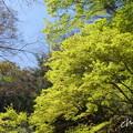 写真: 北鎌倉-463