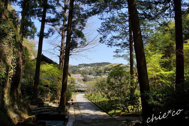 写真: 北鎌倉-472