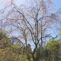 写真: 北鎌倉-475