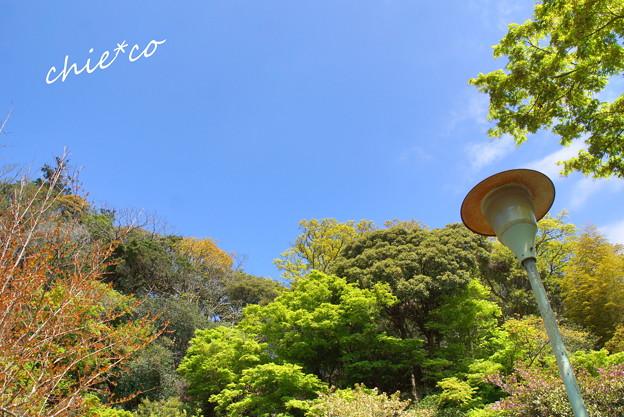 写真: 鎌倉-253