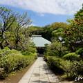 写真: 鎌倉-279