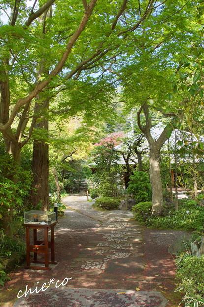 写真: 鎌倉-280