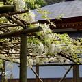 写真: 鎌倉-289