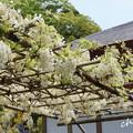 写真: 鎌倉-292